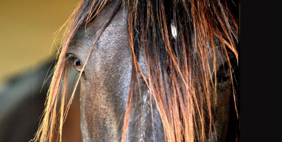 El lenguaje del caballo